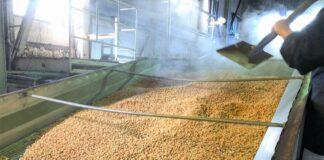 大豆を蒸して冷やす